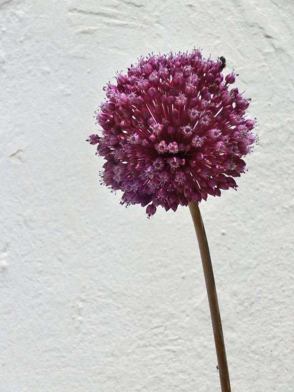Blume im Frühling