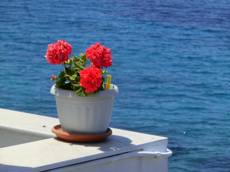 Blumentopf vor dem Meer