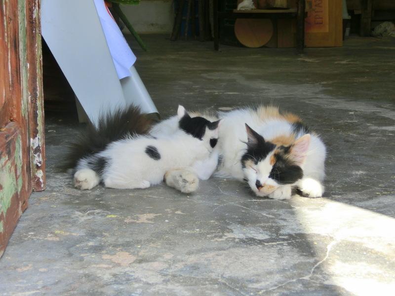 Katzen in Lefkes
