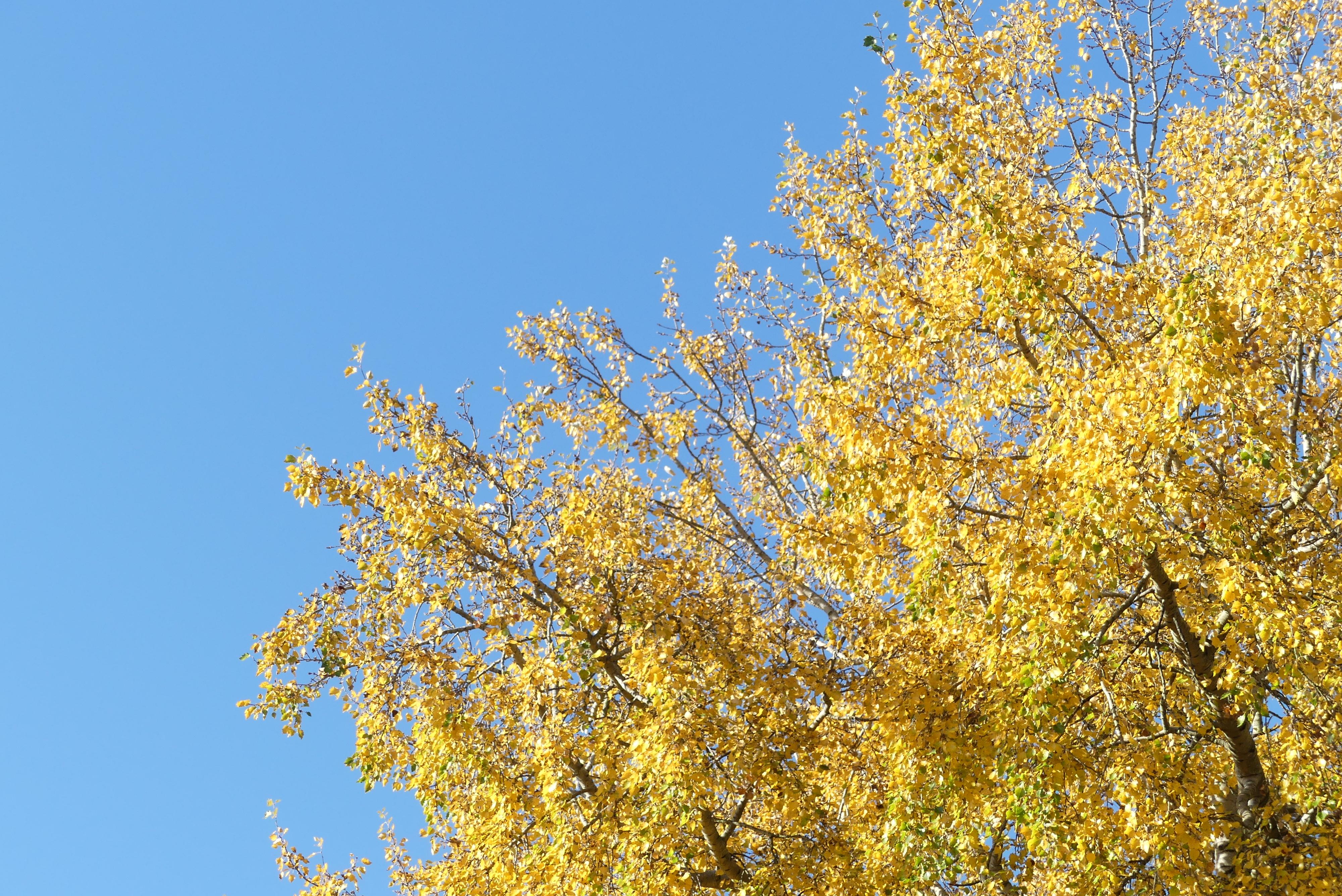Herbstfarben in Maastricht