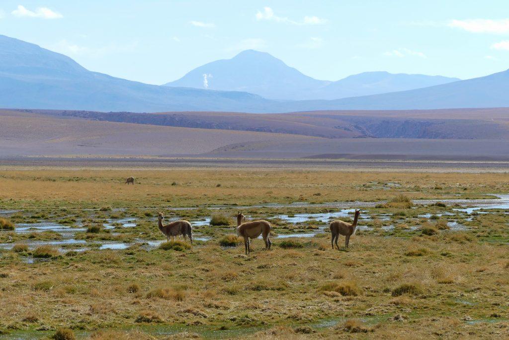 Hochland Chile