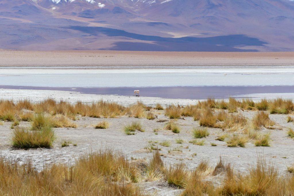 Bolivien Altiplano Hochland