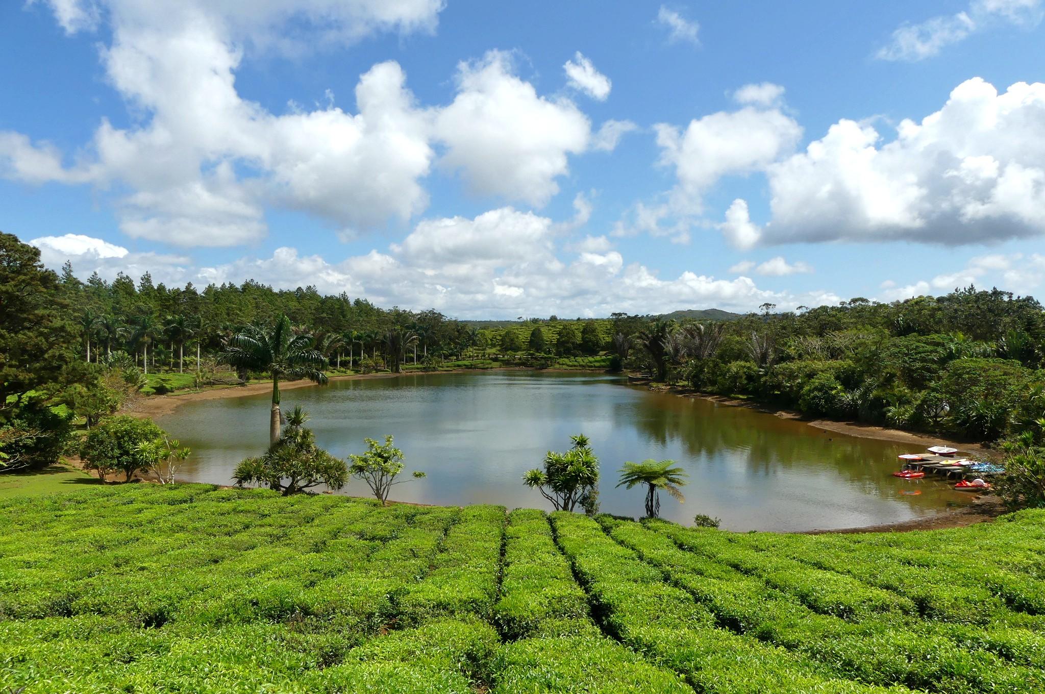 Teeplantage Bois Cheri