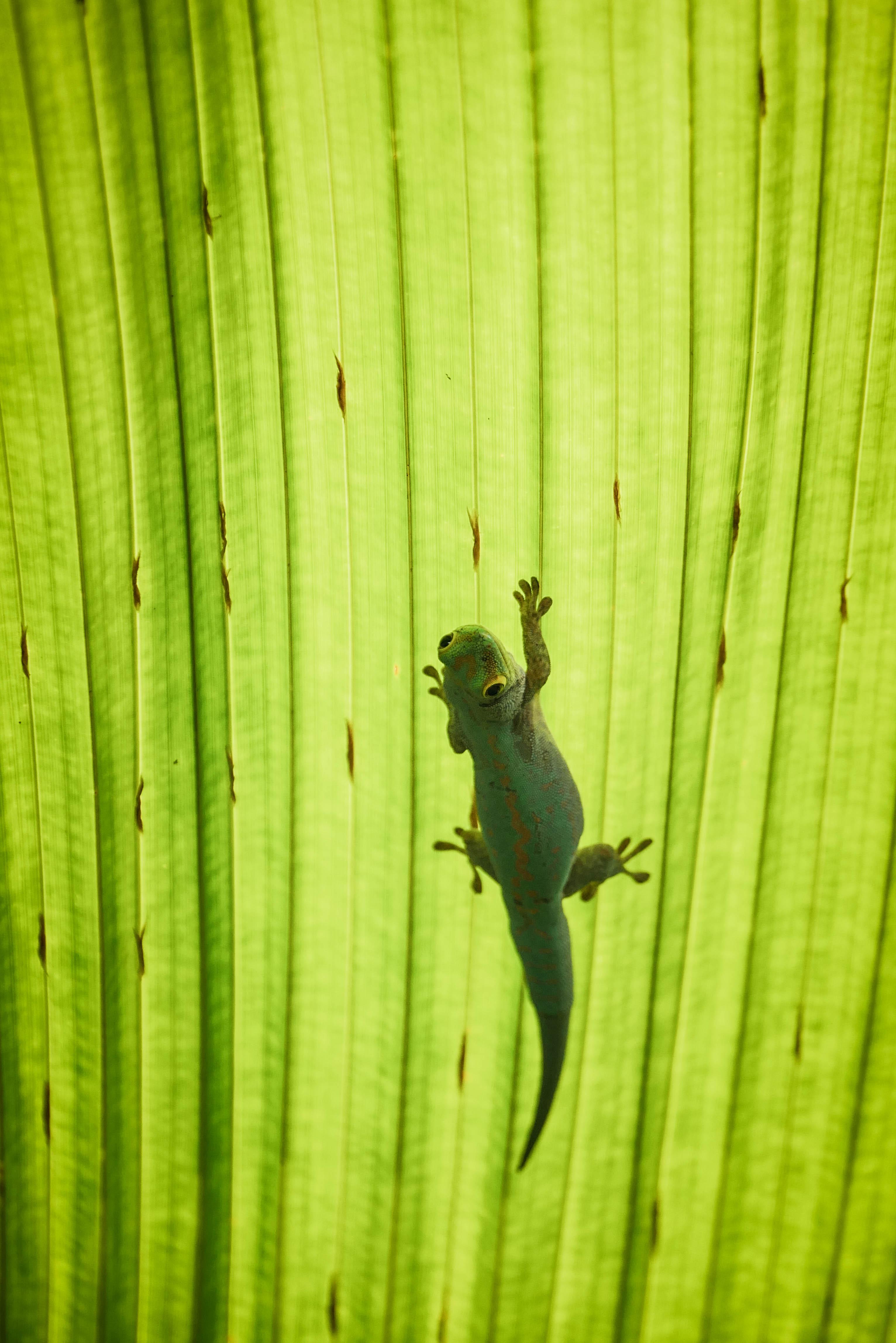 Grüner Salamander