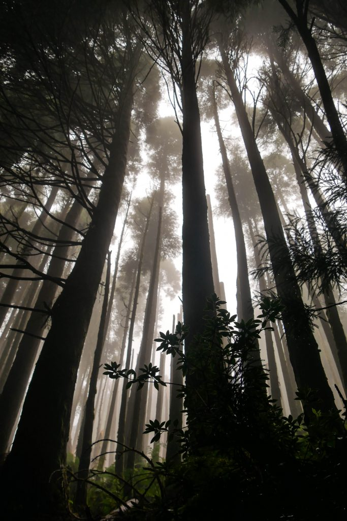 Nebel Wald São Miguel Azoren