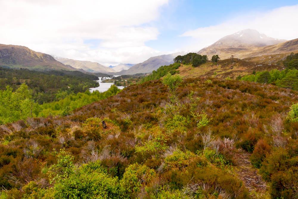 Glen Affric, Schottland