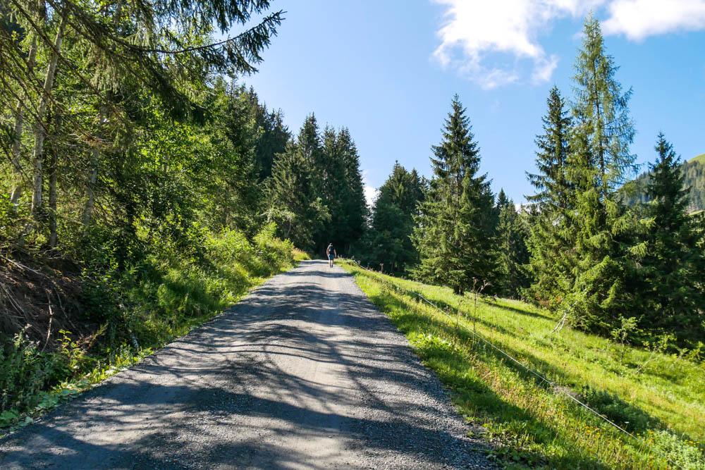 Forstweg hinauf zur Jagglhütte