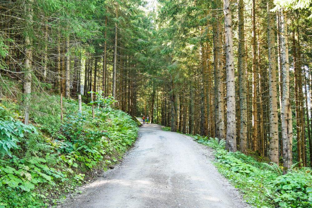 Waldweg bei der Wanderung zur Jagglhütte