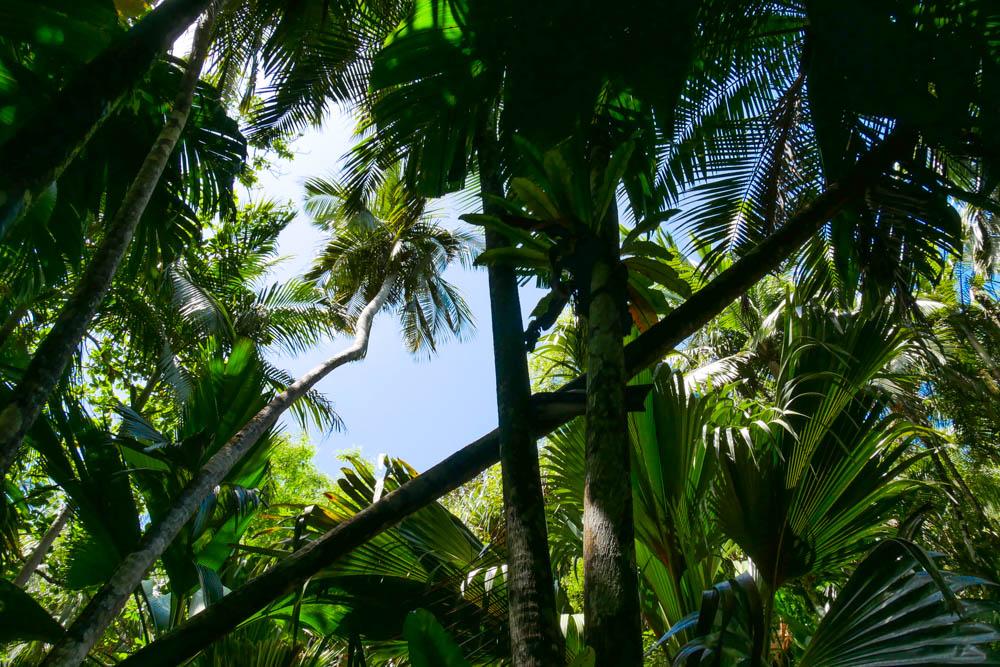 Dschungel Praslin
