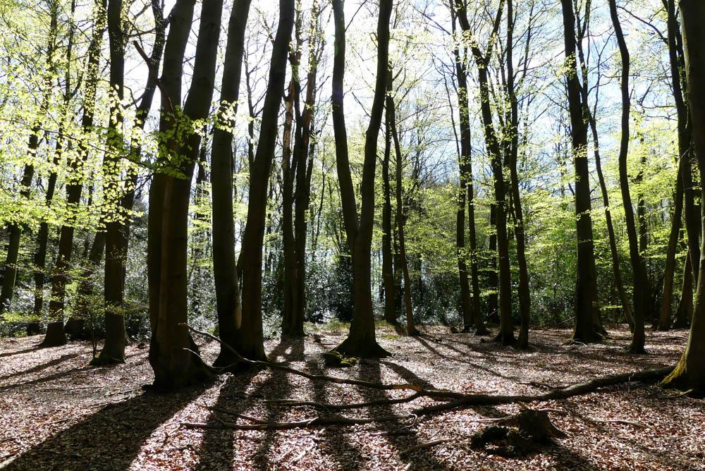 Wald Eifelsteig Etappe 2