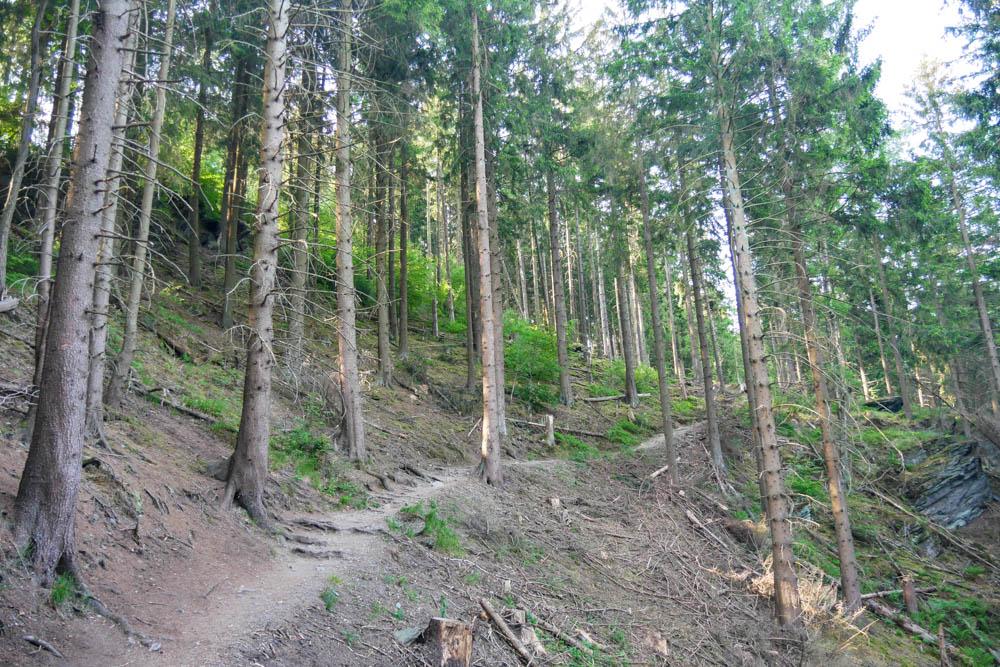 Waldweg Etappe 3 Eifelsteig