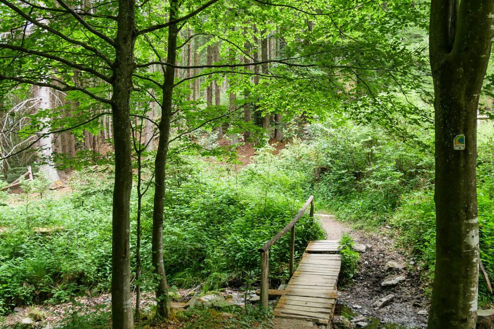 Waldpfad Eifelsteig Etappe 3