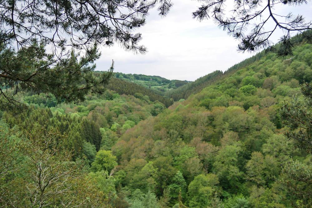 Aussicht über das bewaldete Rurtal