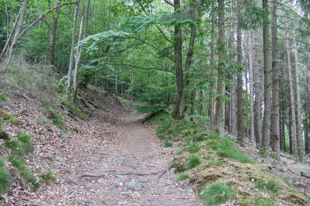 Waldwege Eifelsteig Etappe 3